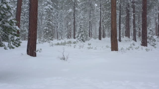 peaceful snowy forest drone/dolly shot - season stock videos & royalty-free footage