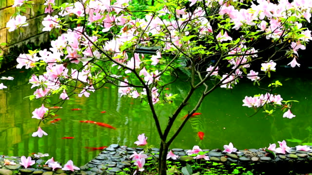 Peach fish pond