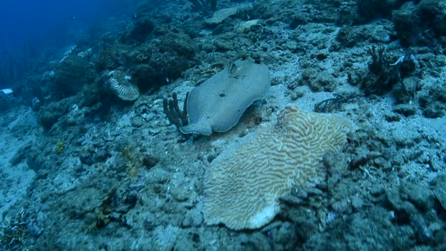 peacock flounder. - flounder stock videos & royalty-free footage
