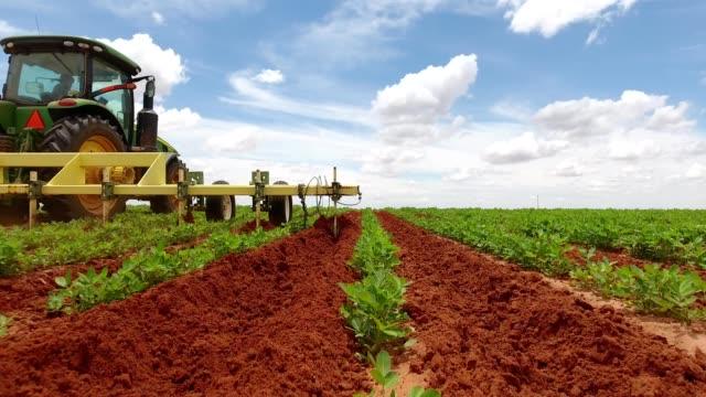 vidéos et rushes de peanut field flyover - tracteur