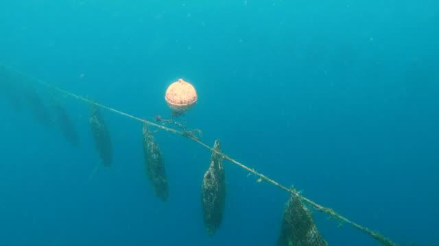 vídeos de stock, filmes e b-roll de pearls being cultivated below the ocean surface tahiti - ilha tahaa
