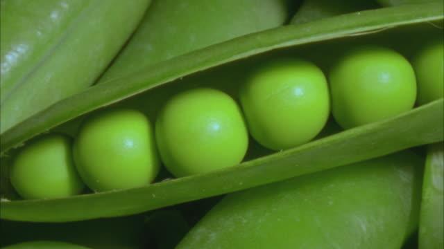 ECU, PAN, Peas (Pisum sativum) in pod