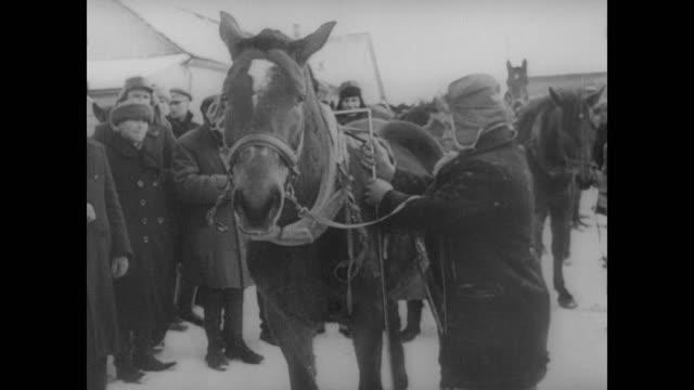 peasants surrender their horses to the german army - deutsches militär stock-videos und b-roll-filmmaterial