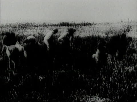peasants working in field in jewish agricultural colony in crimea ussr - judaism stock videos & royalty-free footage