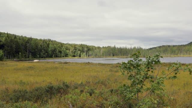 vidéos et rushes de tourbière nature paysage panorama en été - marécage