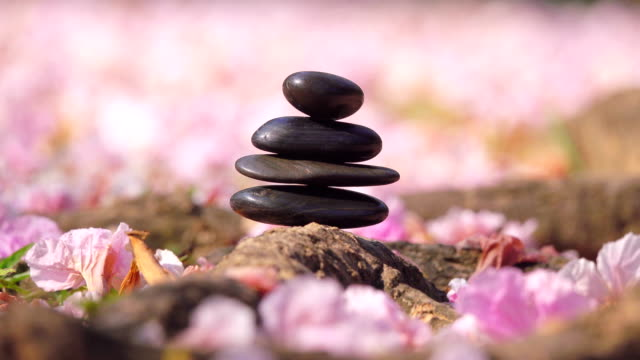 pebble stones over pink flowers - spa stock videos & royalty-free footage