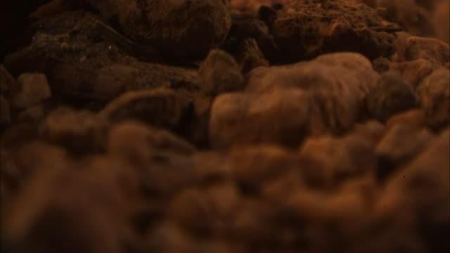 vídeos de stock, filmes e b-roll de pebbles and sand tumble in the wind. - pedra solta