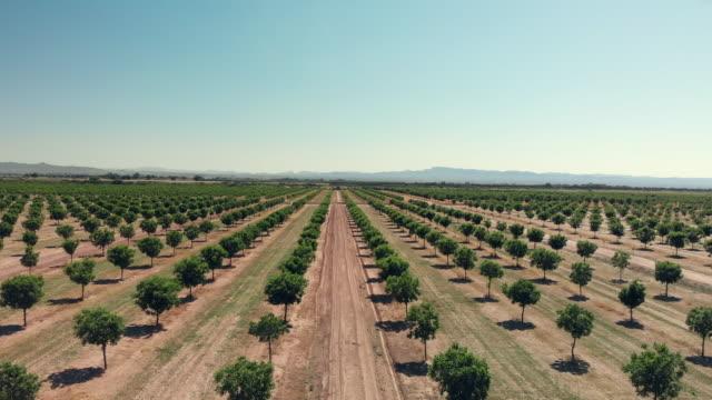 vídeos de stock e filmes b-roll de pecan orchard on the us/mexico border with the border wall in the background - texas