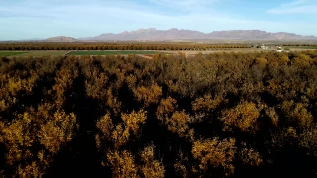 pecan orchards and farmland - orchard stock videos & royalty-free footage
