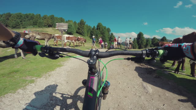 pedalling mountain bike on the alps between cows - human limb stock videos & royalty-free footage