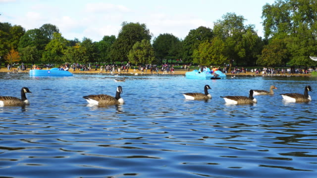 pedalo riders on the serpentine in london hyde park (uhd) - pedal boat stock videos and b-roll footage