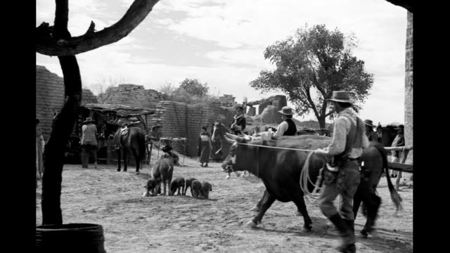 vídeos de stock, filmes e b-roll de pedestrians and wagon train on main street of very small western town / horses wagons stagecoaches driving through town adobe buildings under... - animal de trabalho