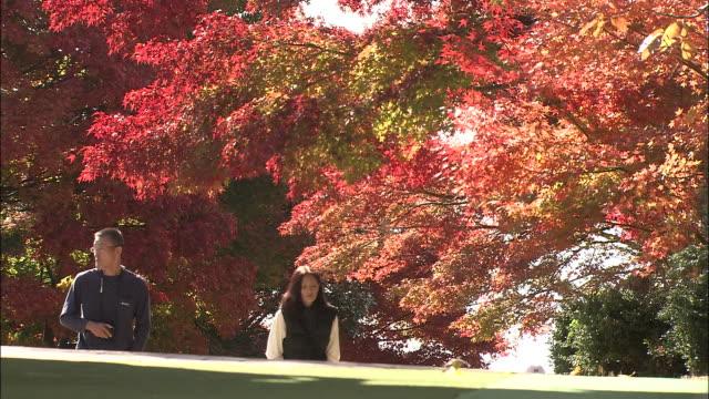 pedestrians walk along a street lined by vibrant autumn trees. - gemeinsam gehen stock-videos und b-roll-filmmaterial