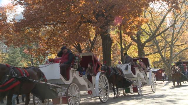 ms pedicabs and horse carriages riding in autumn in central park / new york, new york, united states - arbetsdjur bildbanksvideor och videomaterial från bakom kulisserna