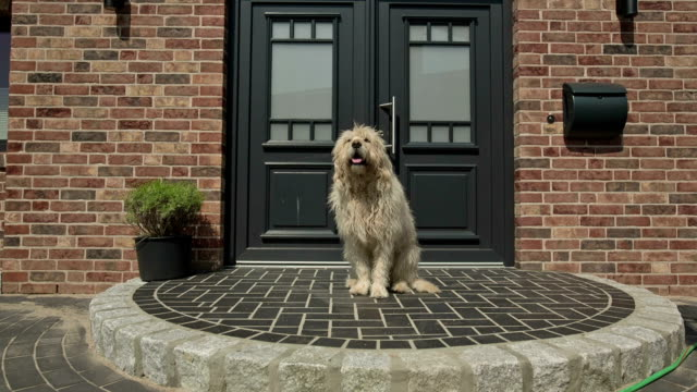 A pedigree dog at the front door of a family home