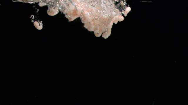 vídeos de stock e filmes b-roll de peeled shrimps diving in super slow motion in water - camarão