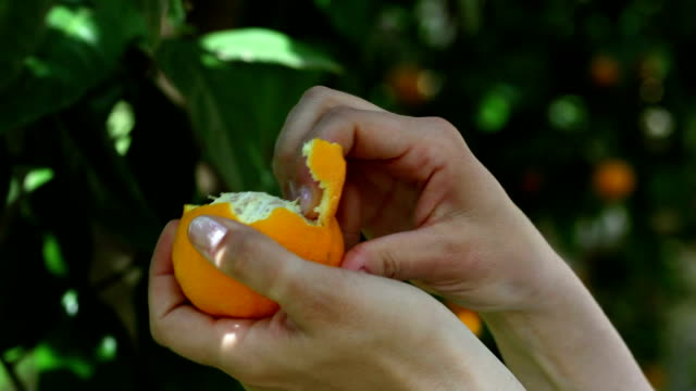 ピーリング、オレンジ - オレンジ果樹園点の映像素材/bロール