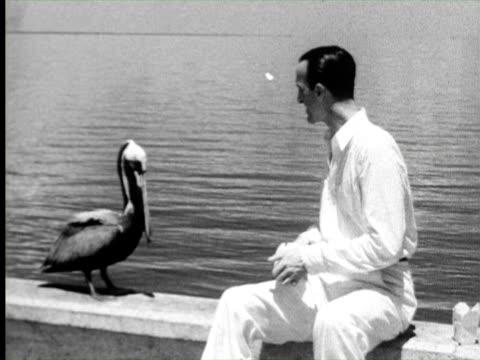 B/W Pelican eating food, Florida / AUDIO