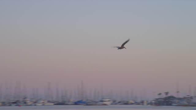 A pelican flies above a marina and a beach in Santa Barbara.