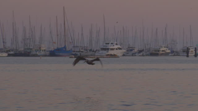 A pelican flies over and dives into the ocean for fish near a marina at twilight.