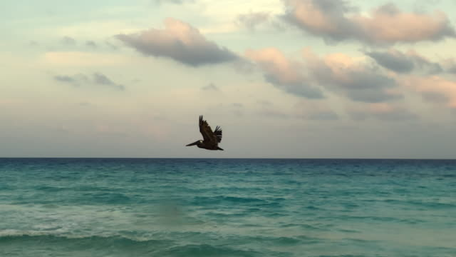 pelican flying show off and cancun city and beach in the horizon - cancun stock videos & royalty-free footage