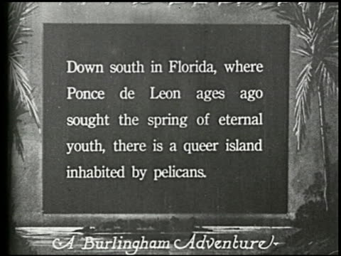 pelican island - 1 of 10 - pelican island film title stock-videos und b-roll-filmmaterial