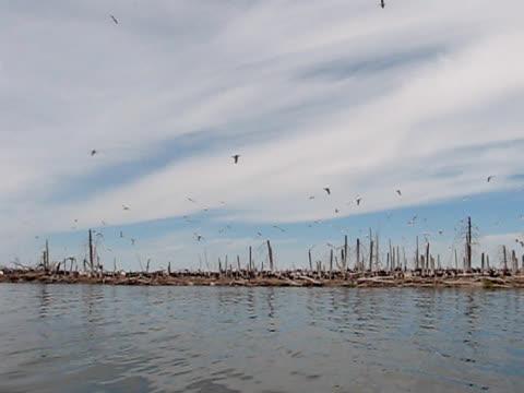 vídeos de stock e filmes b-roll de pelicano ninhos island - pelicano