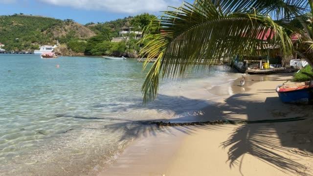 vidéos et rushes de pelican on the beach, tropical les saintes bay, terre de haut island, iles des saintes, guadeloupe, west indies, caribbean, central america - guadeloupe