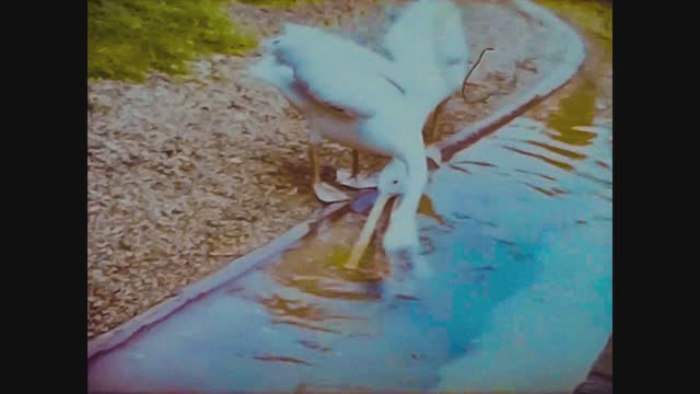 pelicans at the zoo - animal mouth stock videos & royalty-free footage