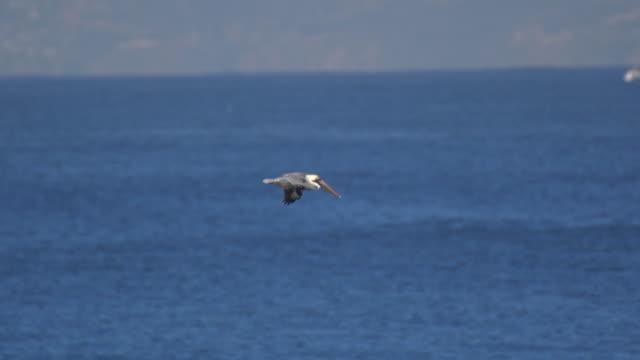 vídeos de stock e filmes b-roll de pelicans fly over the pacific ocean. - slow motion - pelicano