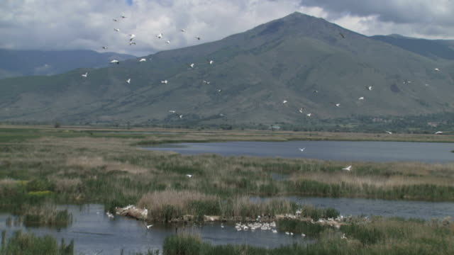 WS AERIAL Pelicans flying in Prespes / Florina, Macedonia, Greece