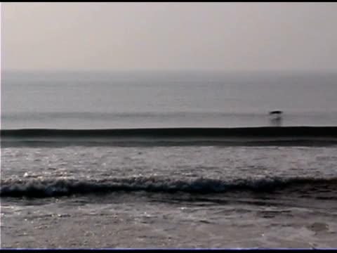vidéos et rushes de pelicans flying over waves on sea - quatre animaux