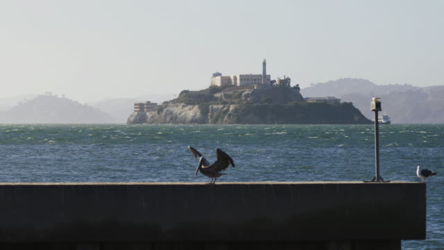 pelicans in the san francisco bay and alcatraz - san francisco bay stock videos & royalty-free footage