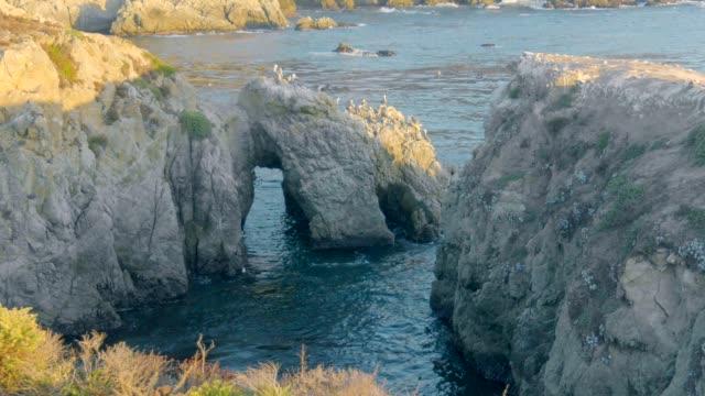 pelikane, die an der felsigen nordpazifikküste nisten. - pelikan stock-videos und b-roll-filmmaterial