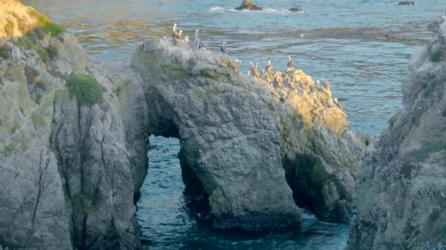 pelicans nesting on rocky north pacific coast. - north pacific ocean stock videos & royalty-free footage