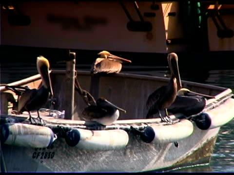 vidéos et rushes de pelicans on boat in harbor, los angeles, california - quatre animaux