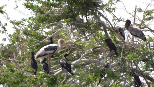 Pelicans resting in trees