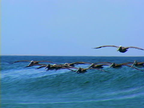 pelicans - medium group of animals stock videos & royalty-free footage