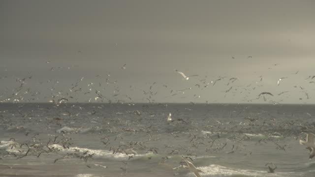 pellican& seagull in flight
