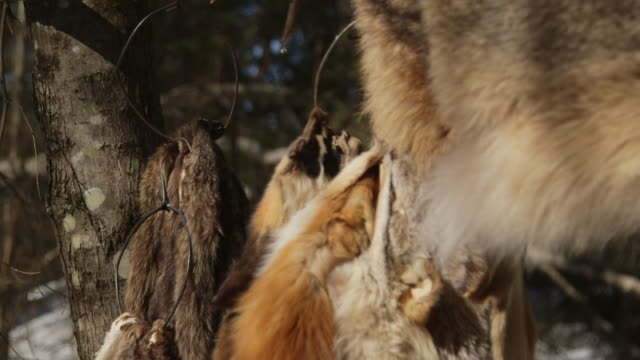 pelts from small game hanging in forest - stuffed stock videos & royalty-free footage