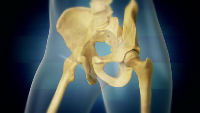 pelvis. loop. - anatomy stock videos & royalty-free footage