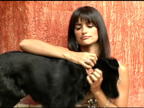 vidéos et rushes de penelope cruz at the penelope cruz los angeles confidential magazine cover shoot at los angeles confidential in los angeles, california on november... - penélope cruz