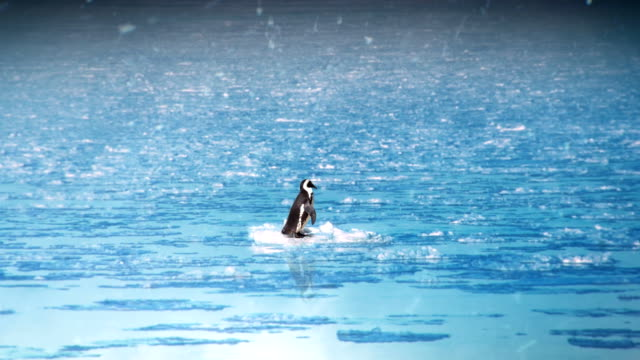 edited montage - penguin alone. - climate change stock videos & royalty-free footage