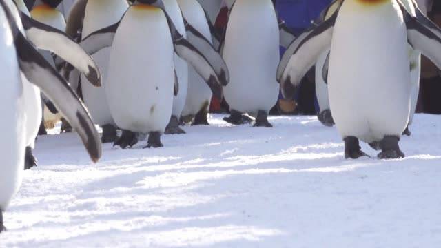penguin and family parade in winter time - parade stock videos & royalty-free footage