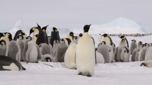 penguin colonies near and far - antarctica penguins stock videos & royalty-free footage