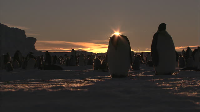 ms penguin colony at sunset audio / ekstrã¶m ice shelf,atka iceport emperor penguin colony,  queen maud land, antarctica - antarctica sunset stock videos & royalty-free footage