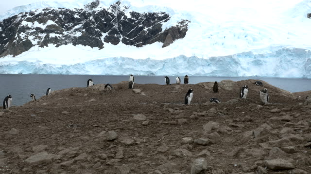 vídeos y material grabado en eventos de stock de penguin colony in antarctica - boca de animal