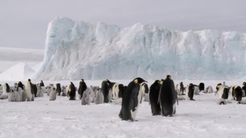 colonia di pinguini piano lr - antarctica video stock e b–roll
