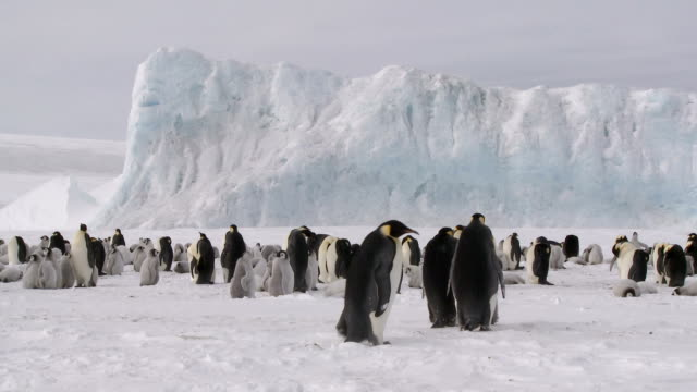 penguin colony lr pan - antarctica stock videos & royalty-free footage