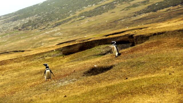 vidéos et rushes de pingouin dans l'antarctique. image de voyage inspirant crainte révérencielle. - oiseau qui ne vole pas